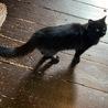 美猫のめいちゃんです サムネイル4