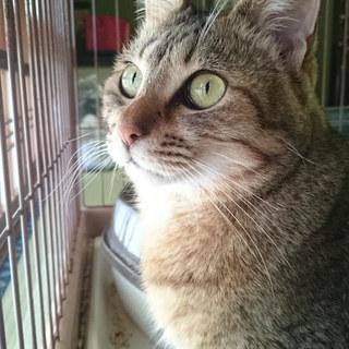 『ティオ』接客好き・遊び好きな猫さん