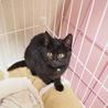 なつっこいモフモフ黒猫の子猫 サムネイル2