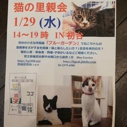 ★水曜に渋谷区初台で猫の里親会★ サムネイル1