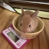 子ウサギの里親様募集(相談中につき一時受付中止 サムネイル5