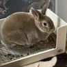 子ウサギの里親様募集(相談中につき一時受付中止 サムネイル4