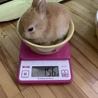 子ウサギの里親様募集(相談中につき一時受付中止 サムネイル7