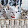 子猫15匹成猫15匹の譲渡会・愛知県みよし市