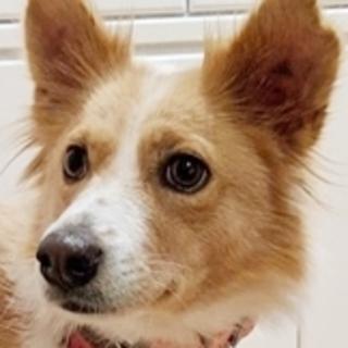 保護犬ナンバーD1370 ミックス犬