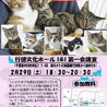 土曜の夜の保護猫譲渡会vol.2
