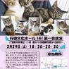 土曜の夜の保護猫譲渡会vol.2