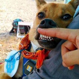 怖い事一杯、でも犬は大好き!優しい男子ここの