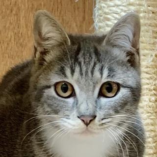 ふわふわ美猫のエトワール…4ヶ月