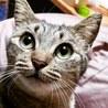 人間大好きメス1歳のキジ猫もんちゃん