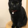 黒猫の1歳2ヶ月ー福岡県