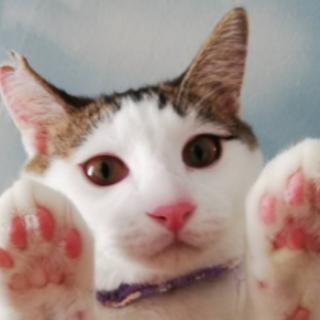 人も猫も遊ぶのも食べるのも大好き「ミー太」です!