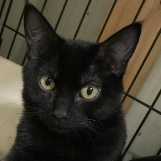★可愛い黒猫の男の子