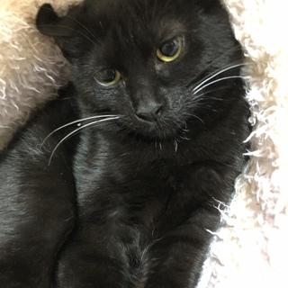 (生後4ヶ月ぐらい)黒猫の女の子です♪