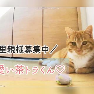 〘 動画あり〙ふわふわ茶トラくん꙳★*゚