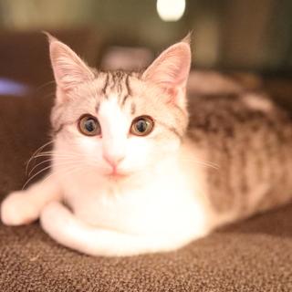 【一旦終了】ふわふわの美形子猫。まるちゃん。