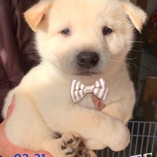 個体番号:20-31 可愛い仔犬です。