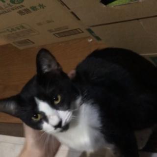 甘えん坊!兄弟3匹 黒猫ちゃんです