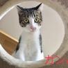 1.26藤井寺市役所前広場譲渡会参加猫ガンバ
