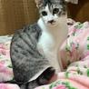 1.26藤井寺市役所前広場譲渡会参加猫テラ