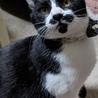 人気のヒゲダン子猫、性格よし!