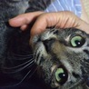 潤んだ緑色の瞳のすももちゃん サムネイル3