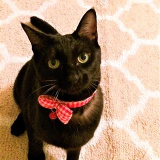 ちょっと人見知りな黒猫「リボン」ちゃん♡
