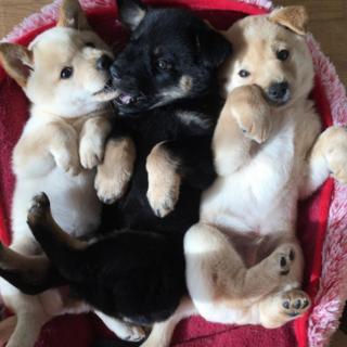 小さな愛らしい3匹です