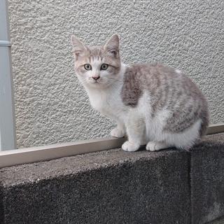 生後5ヶ月位の仔猫です。
