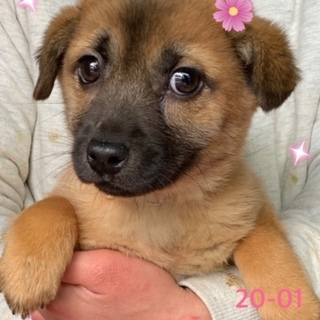 個体番号:20-01 可愛い仔犬