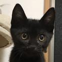 募集一時停止 超馴れ黒猫男子★漱石