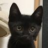 元気いっぱい超馴れ黒猫男子★漱石