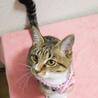 みえちゃん(仮)〜困り顔のかわいい子猫〜 サムネイル2