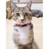 みえちゃん(仮)〜困り顔のかわいい子猫〜 サムネイル3
