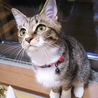みえちゃん(仮)〜困り顔のかわいい子猫〜 サムネイル7