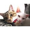 みえちゃん(仮)〜困り顔のかわいい子猫〜 サムネイル6