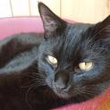 1歳 空気も読める黒猫くん!