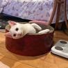可愛い〰白系の猫ちゃん兄妹