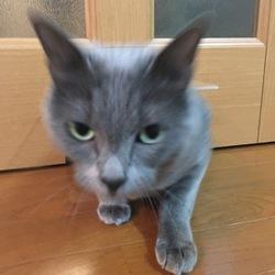 「猫ドアつきました」サムネイル3