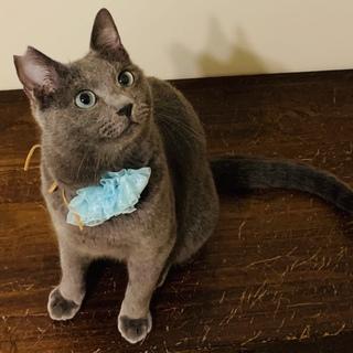 すりすり甘えた綺麗なグレー猫さん!!