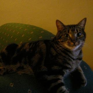オーストラリアから連れてきた猫ちゃんです