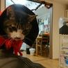 ハロウィンに浮かれる飼い主と迷惑そうな猫の図