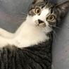 『Terra里親会猫部とワンコ1匹』
