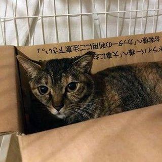 【mimic】1/26(日)譲渡会に参加予定!