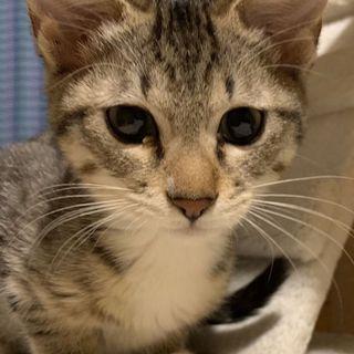 【カミラ】元気いっぱい人馴れ子猫