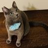 澄んだ瞳が美しいロシアンブルー風猫さん!! サムネイル5