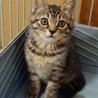子猫キイちゃん推定6ヶ月