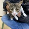 飼育放棄された猫家族の2歳のママの里親募集