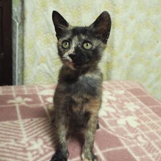 小柄なサビ猫「モロ」ちゃん♡
