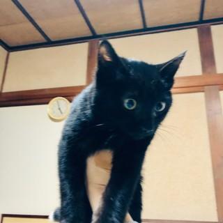 元気で懐こい 黒猫てんちゃん♪